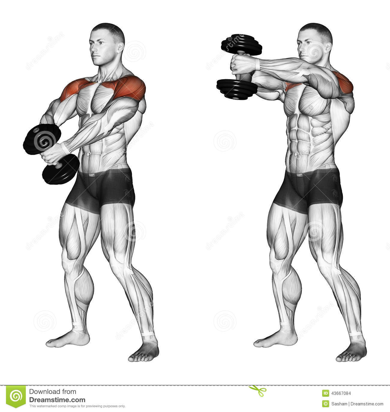 Exercising Ups Of Hands Forward With One Dumbbell