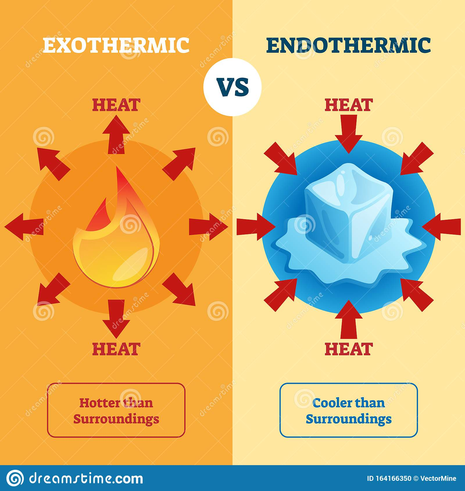 Exothermic And Endothermic Vector Illustration Labeled