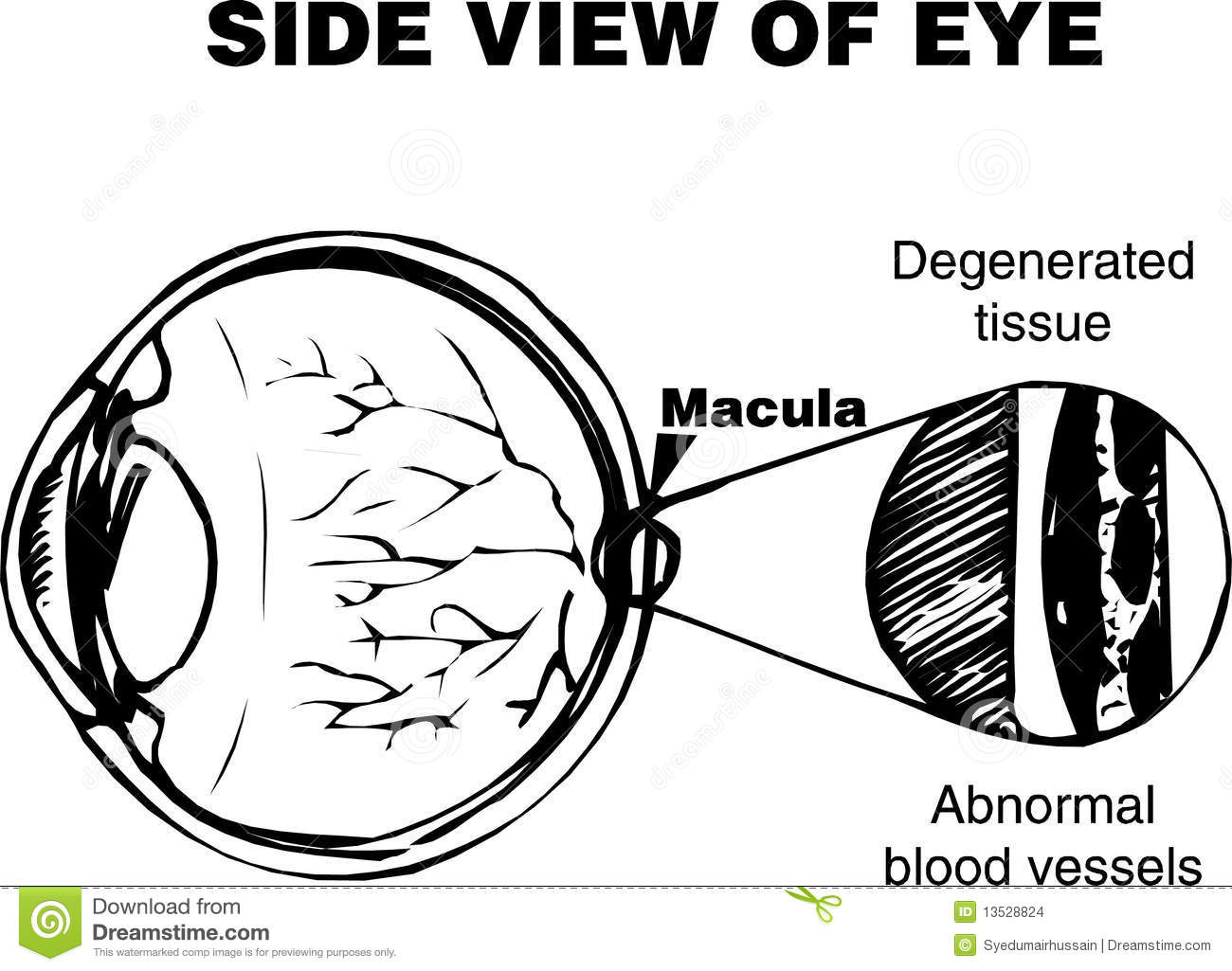 Eye Diagram Stock Vector Illustration Of Degenerated