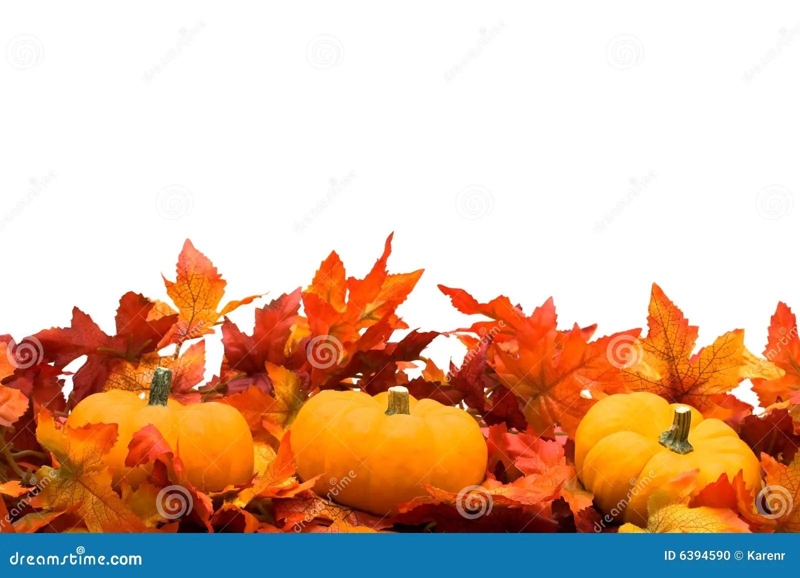 The Gallery For Gt Fall Pumpkin Border Clip Art