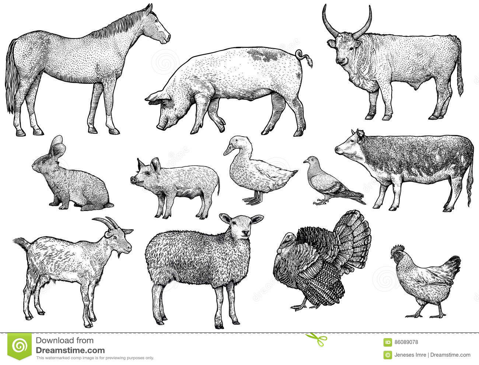 Farm Animal Set Illustration Drawing Engraving Line Art