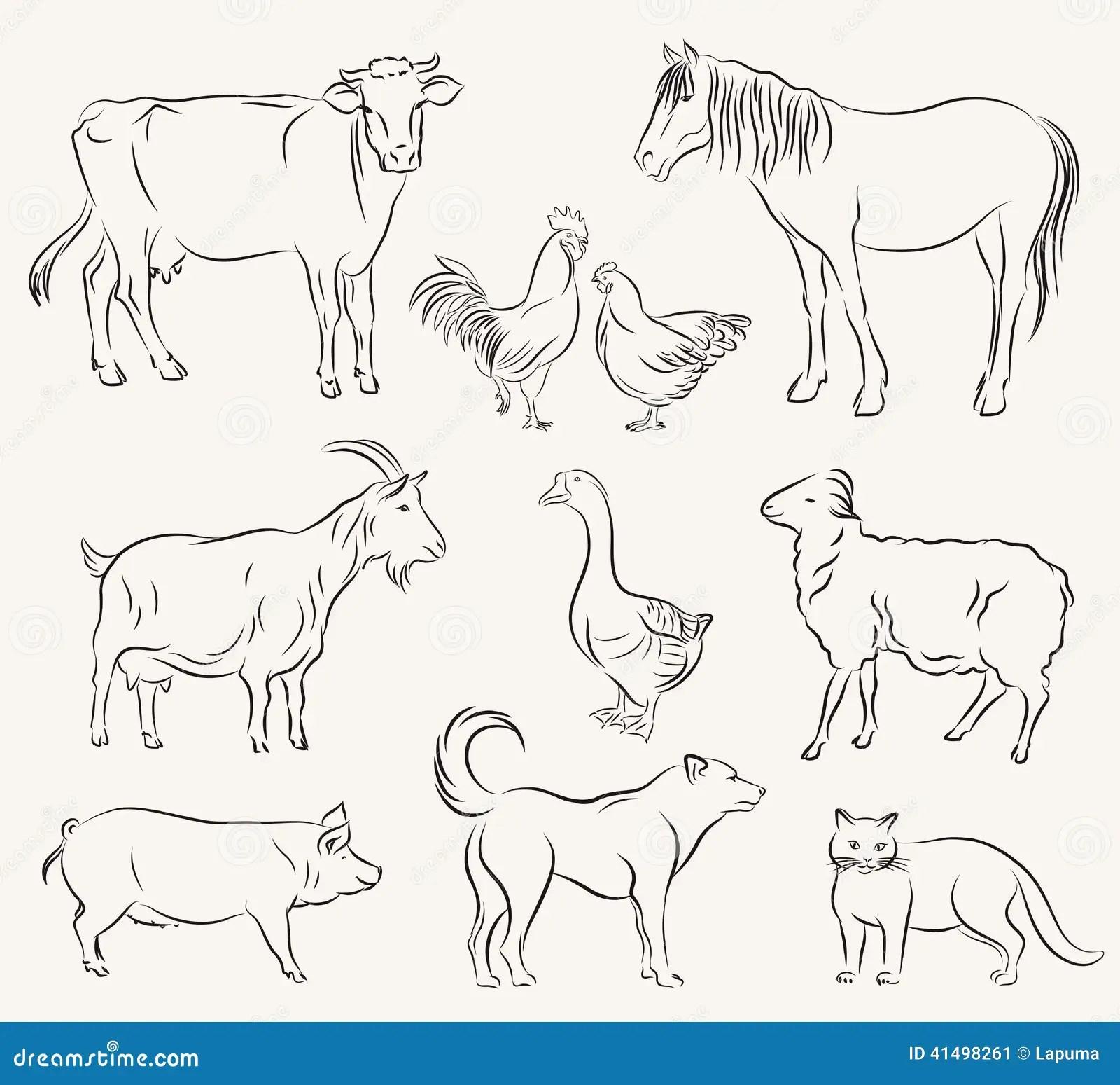 Farm Animals Stock Vector Illustration Of Ruminant Sheep