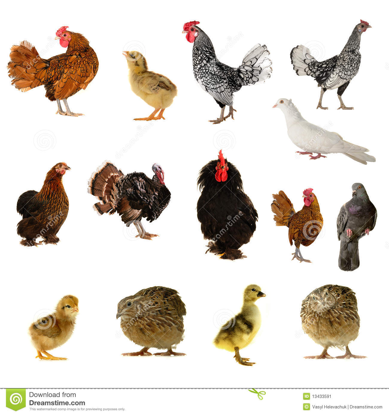 Farm Birds Stock Image Image Of Color Close Chicken