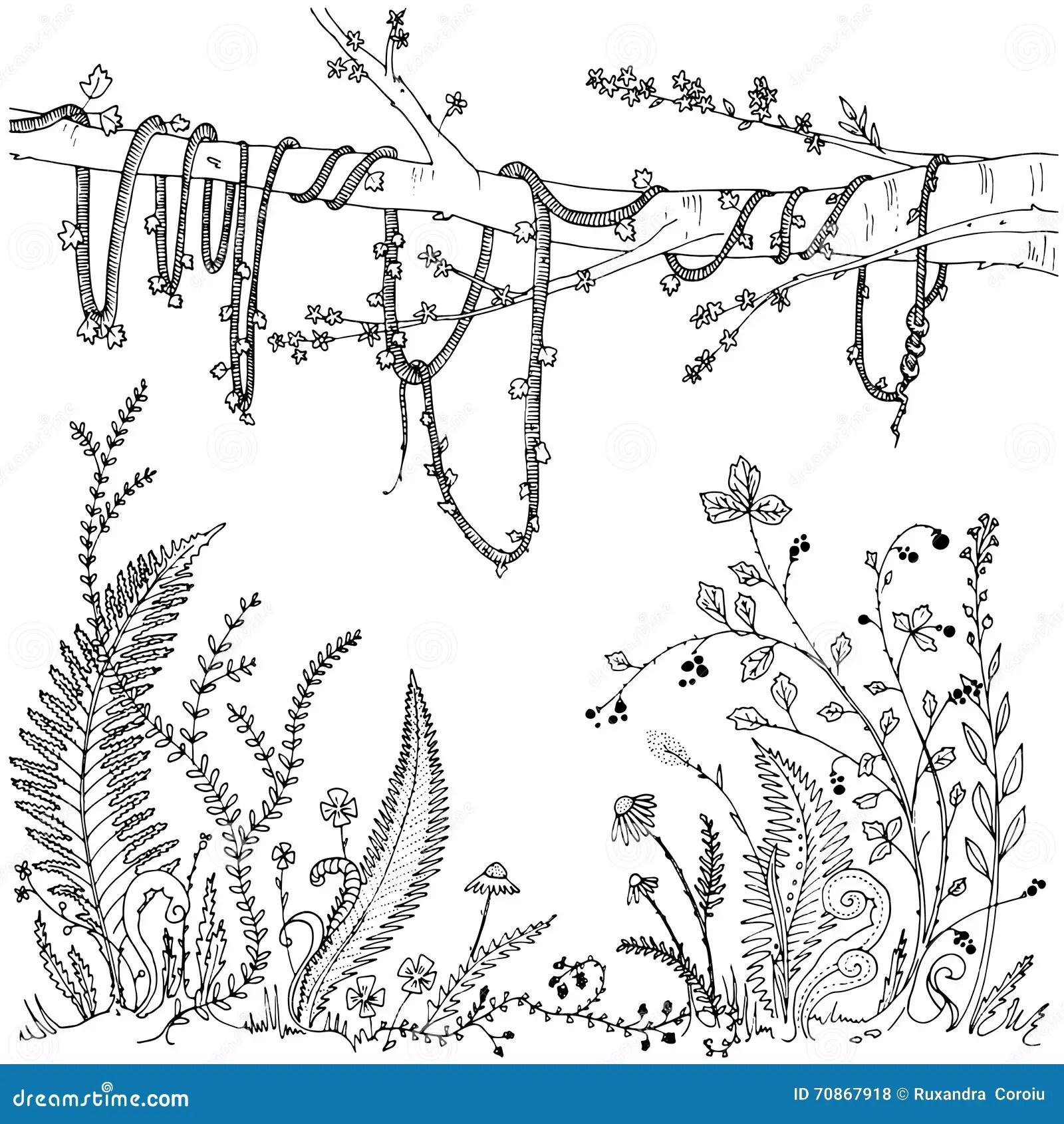 Farne Blumen Reben Und Beeren In Einem Wald Dichte