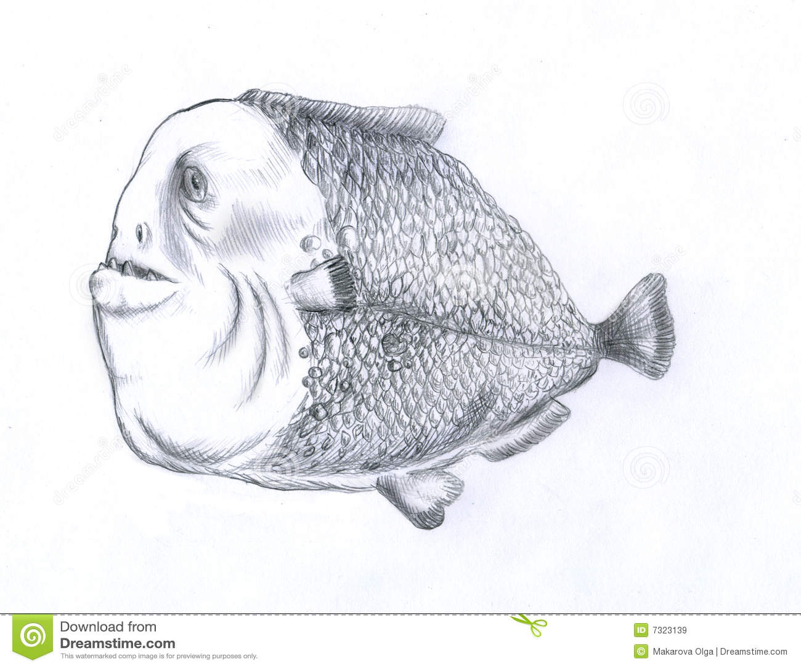 Fat Piranha Fish Royalty Free Stock Images