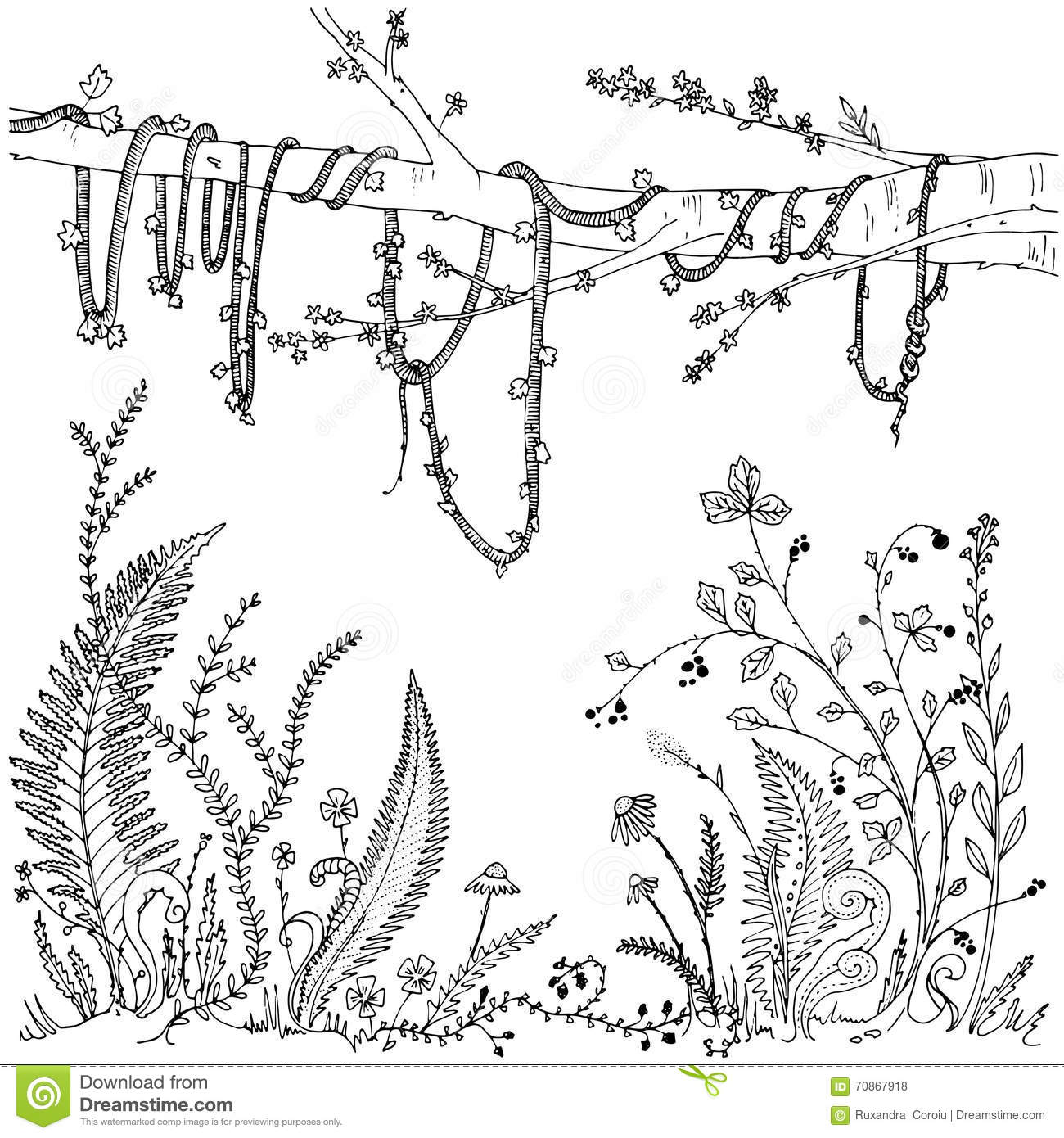 Fern Pattern Coloring Pages Sketch Coloring Page