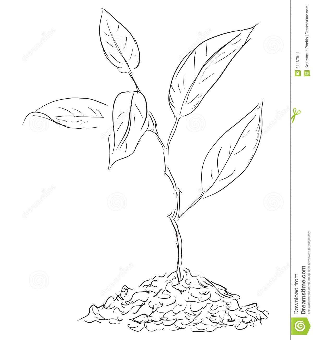 Figure Twigs Sprout Stock Vector Illustration Of Natural