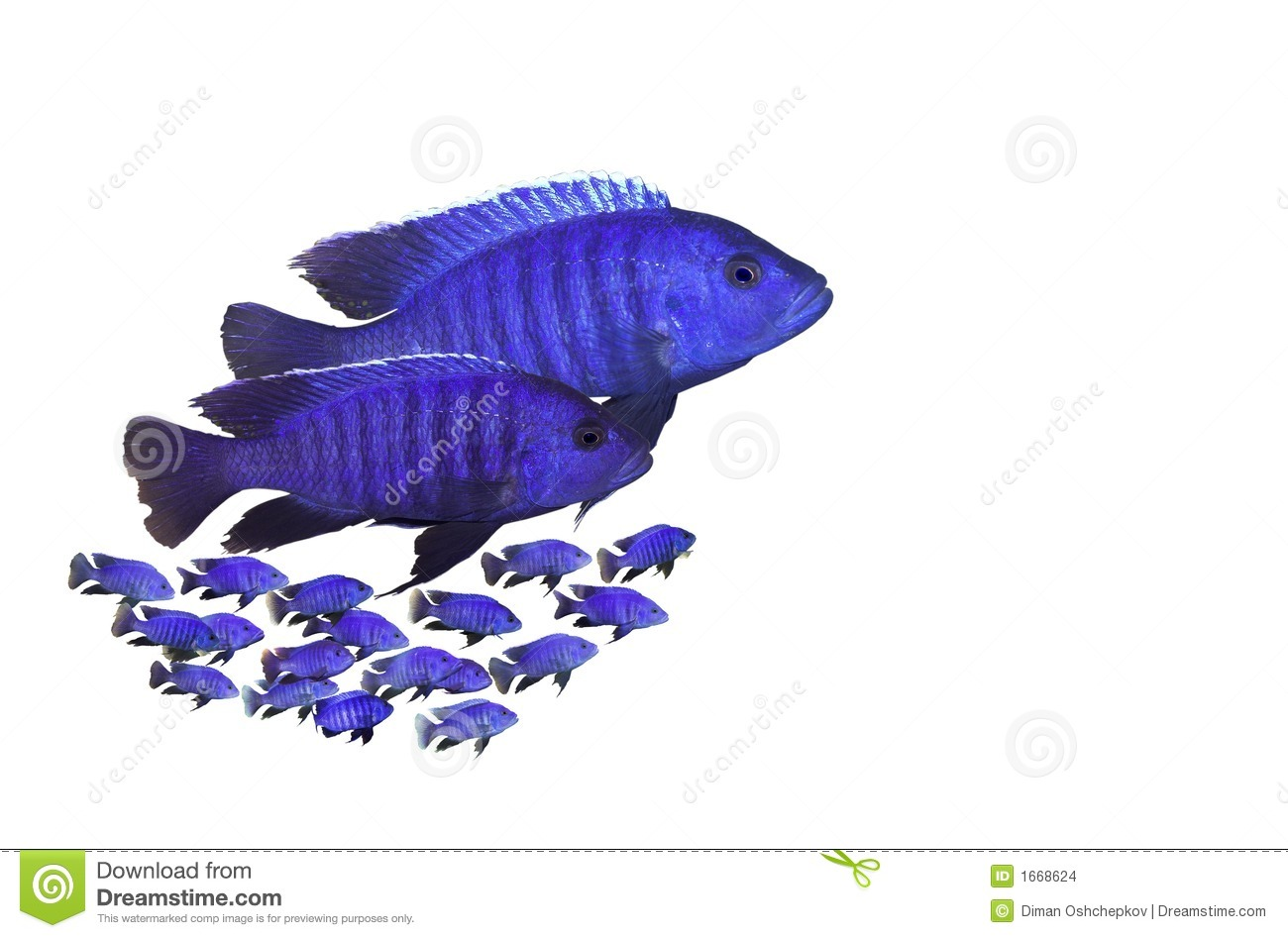 Fish Family Stock Images Image 1668624
