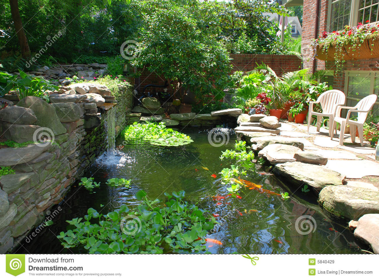 Backyard Pond Plants And Fish