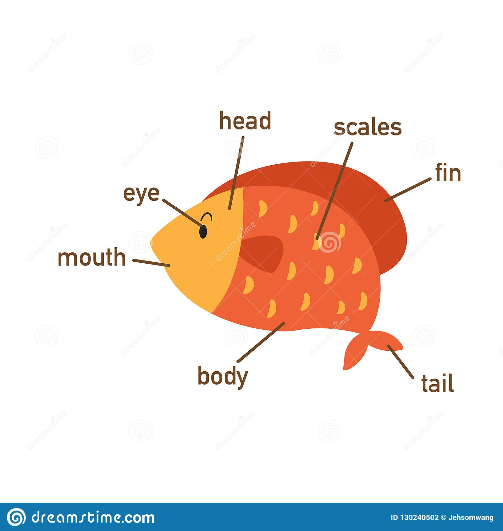 Fish Vocabulary Part Of Body Ctor Stock Vector
