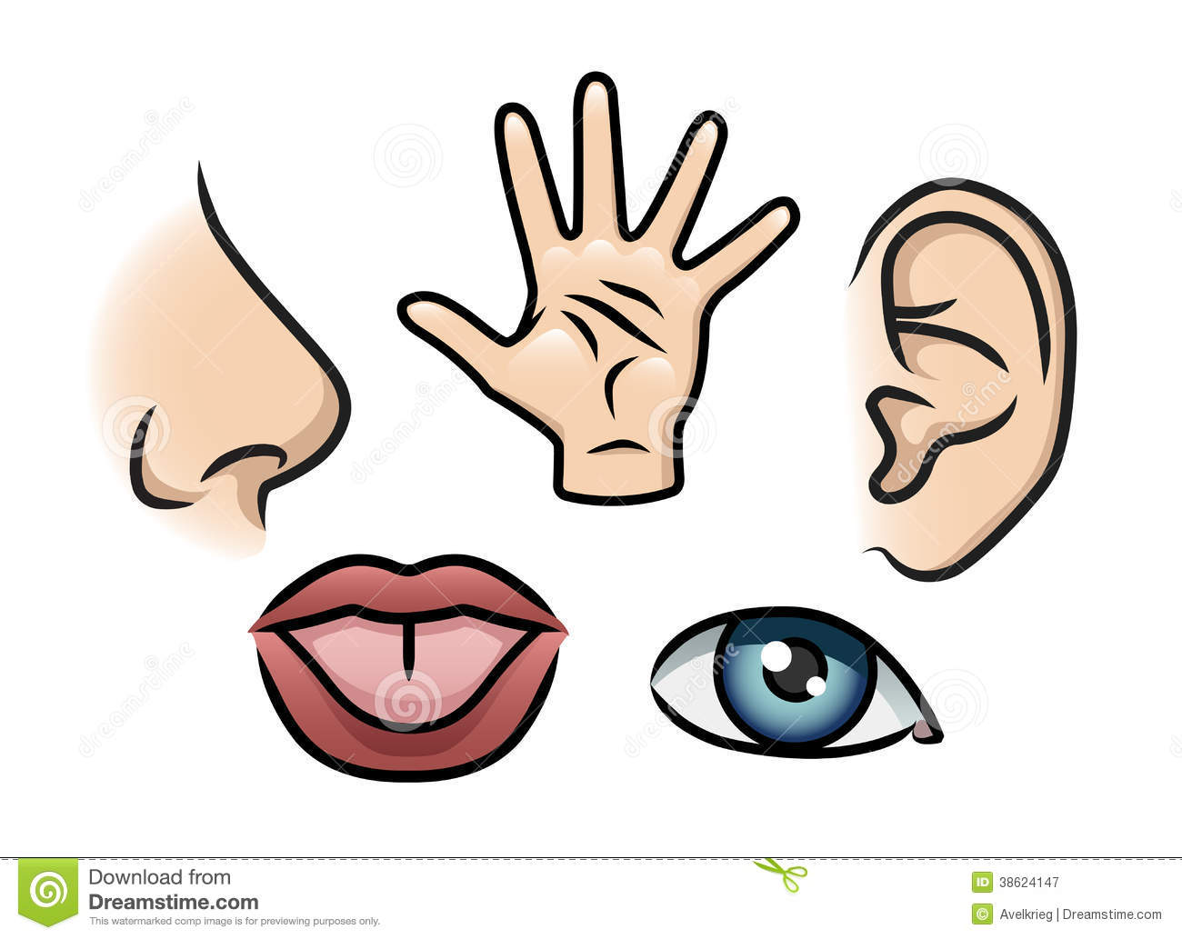 The Five Senses Stock Illustration Illustration Of