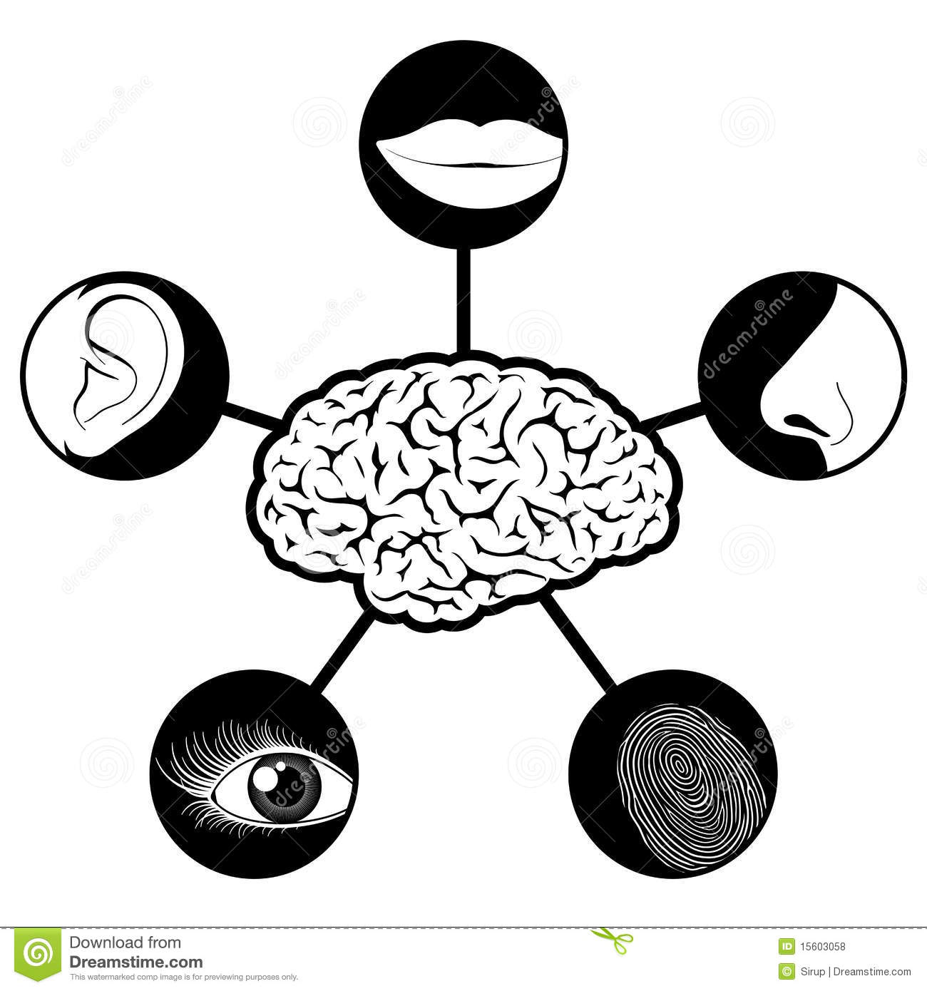 Five Senses Icons Controlled By Brain Stock Vector
