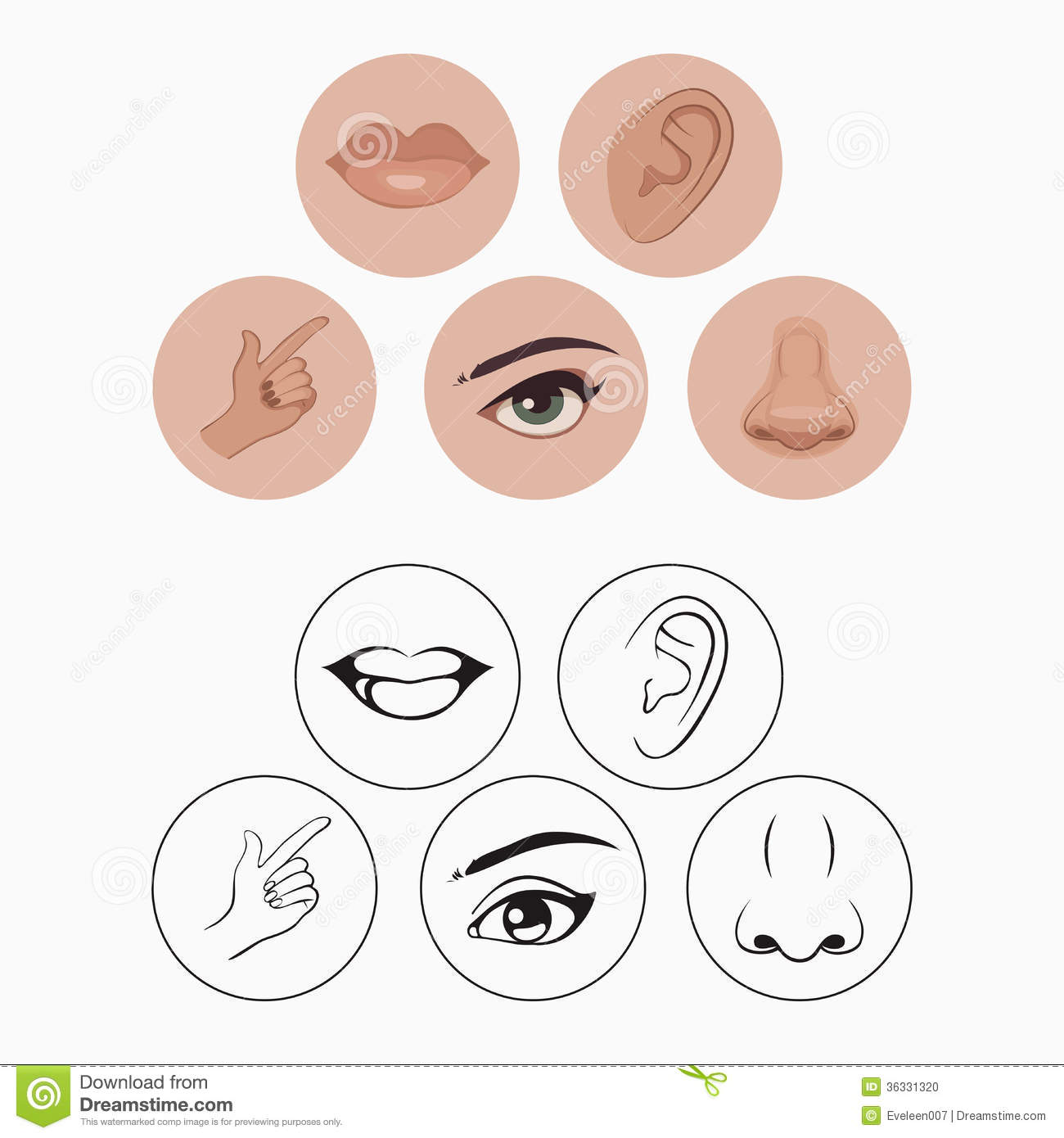 Five Senses Stock Vector Illustration Of Drawing Isolated