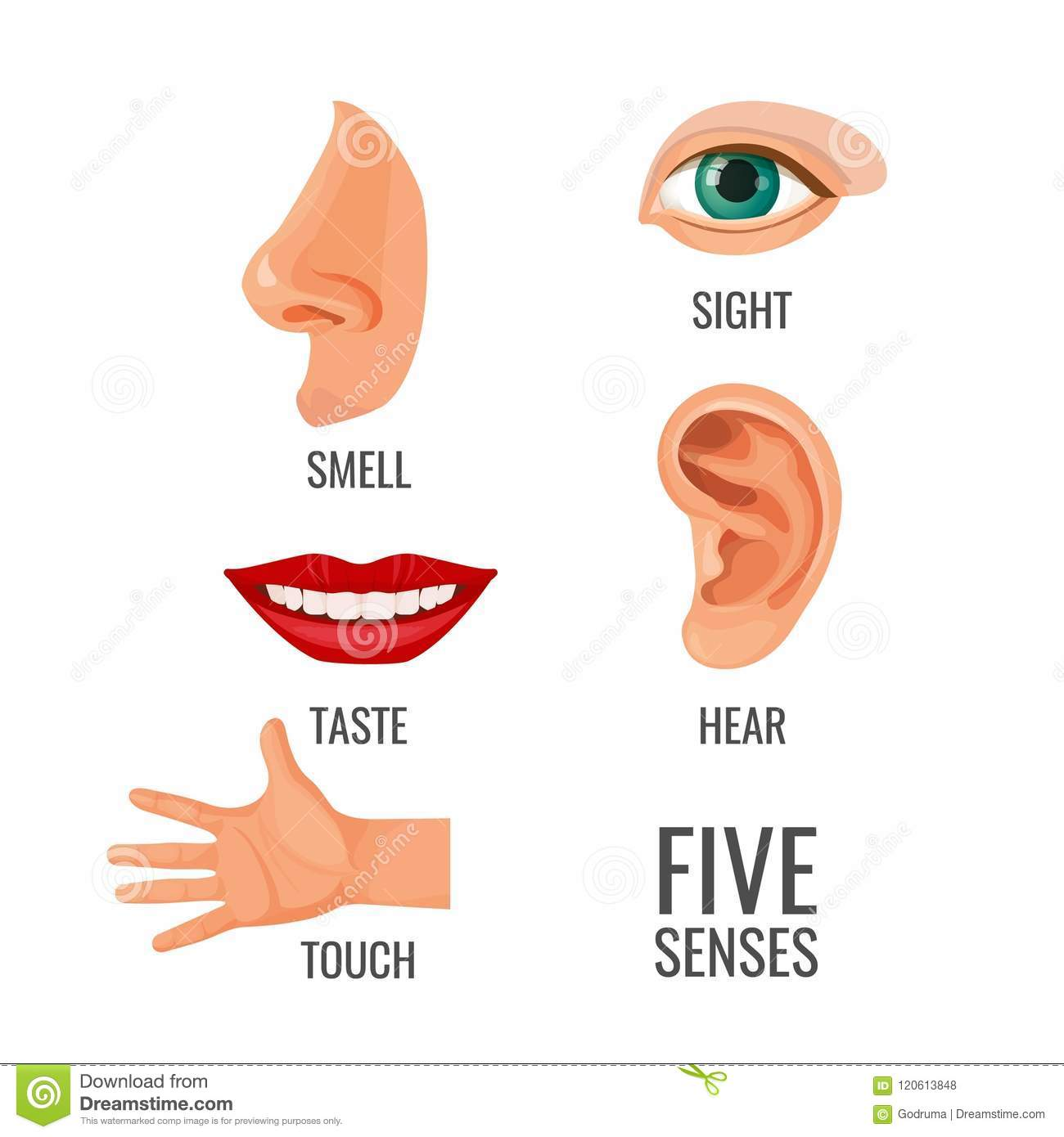Five Senses With Titles At Body Parts Vector Illustration
