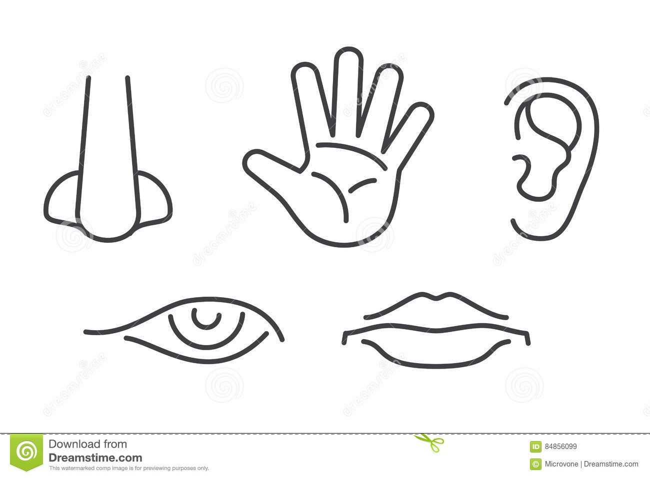 Five Senses Vector Icons Set Isolated White Stock Vector