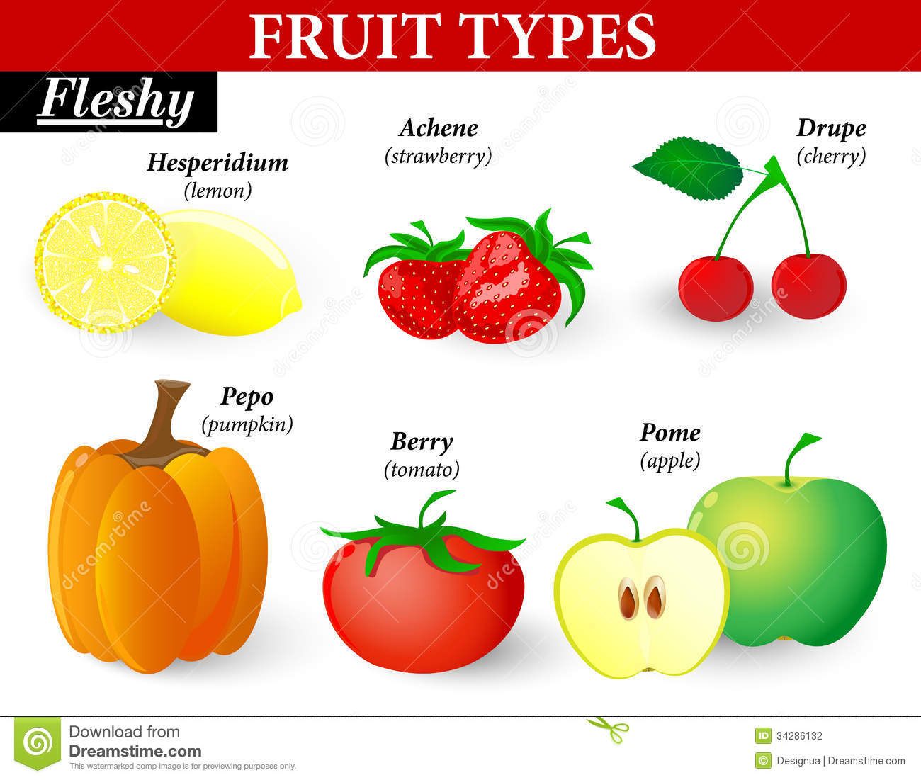 Different Types Different Fruit Types