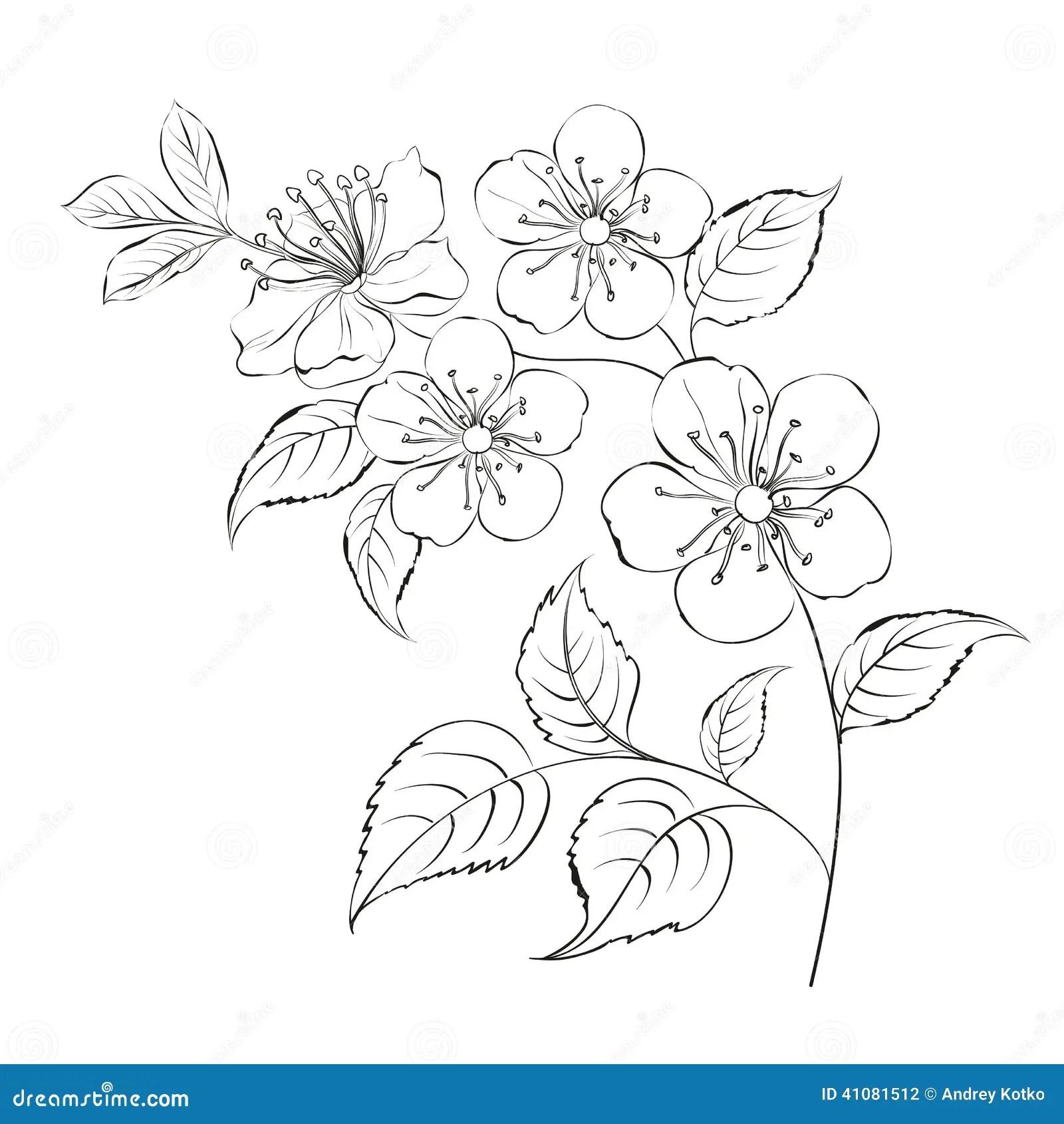 Flor De Cerejeira Sakura Da Mola Ilustracao Do Vetor