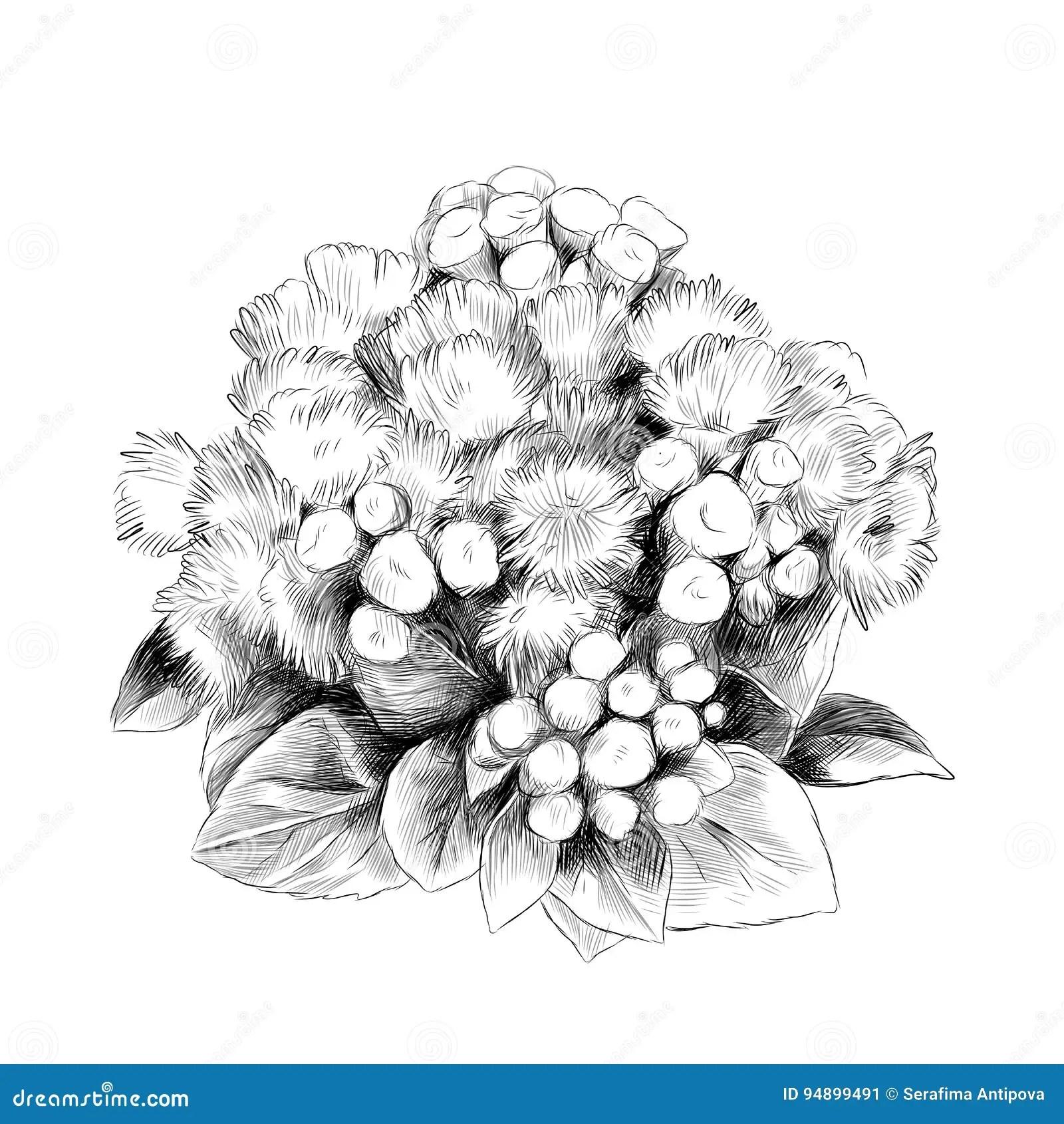 The Flower Bush Bouquet Ageratum Sketch Vector Stock Vector