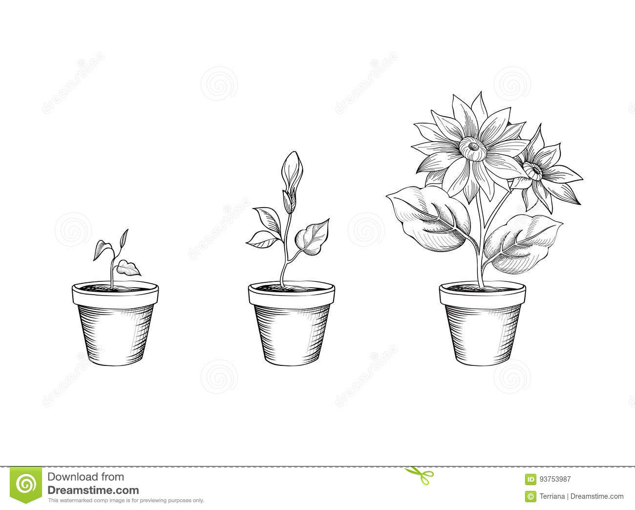 Garden Flower Growth Stages