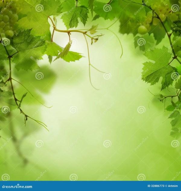 Fond vert avec du raisin image stock. Image du brouillé ...