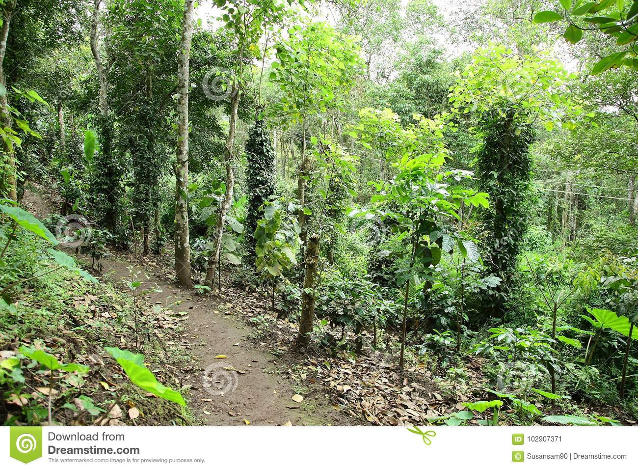 Cover photos for facebook timeline images. Forest Way In The Dense Jungle Stock Image Image Of Foliage Natural 102907371