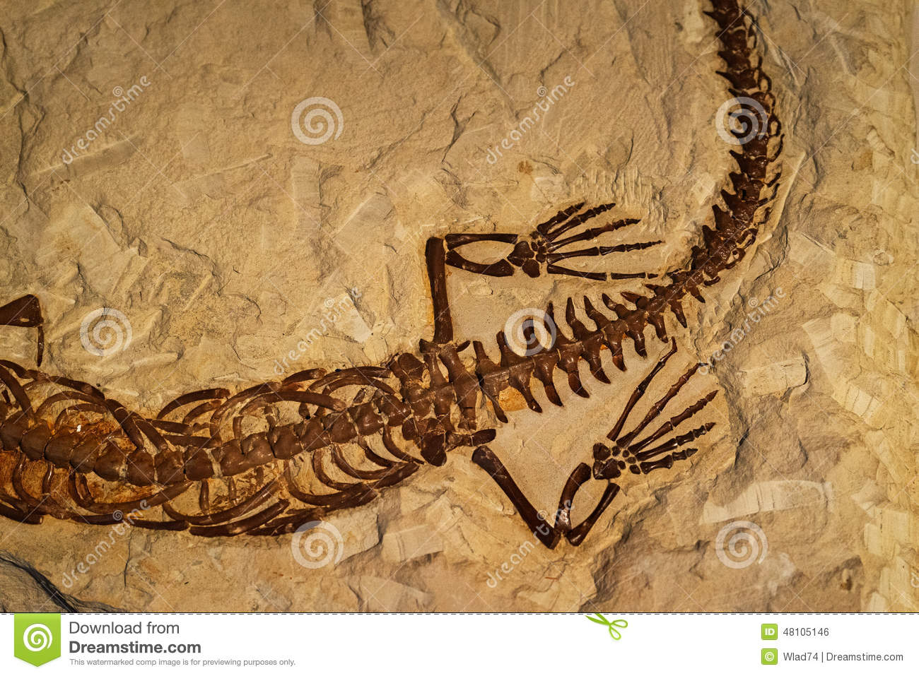 Fossile De Reptile Antique Dans La Roche Photo Stock