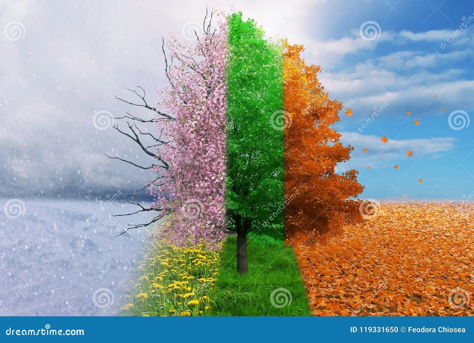 Four Season Change Concept Tree Stock Photo