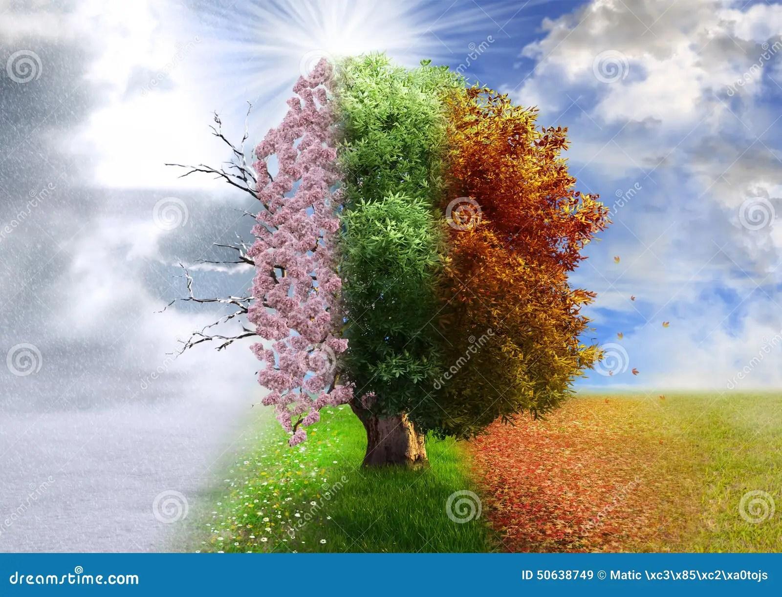 Four Season Tree Stock Photos
