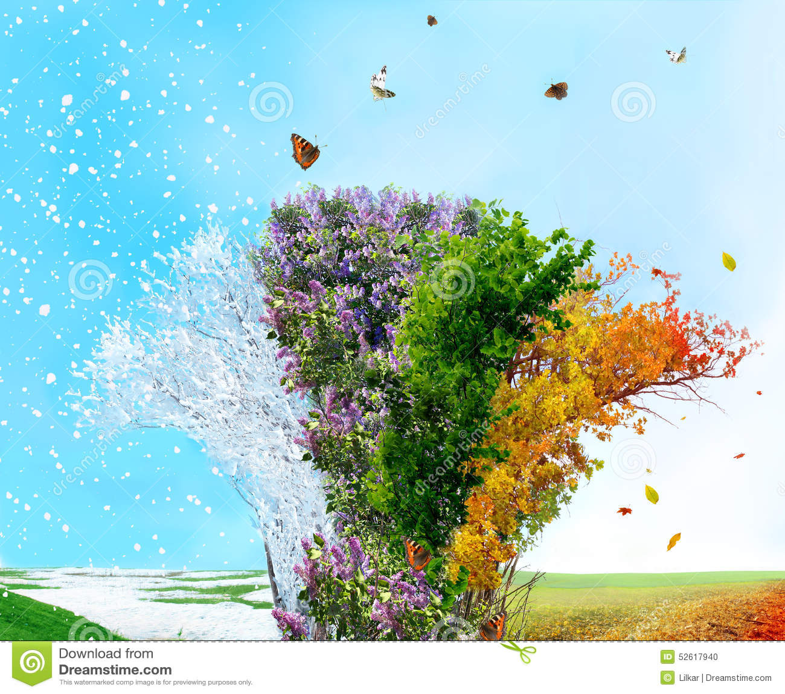 Four Season Tree Stock Photo Image Of Beautiful Lilac