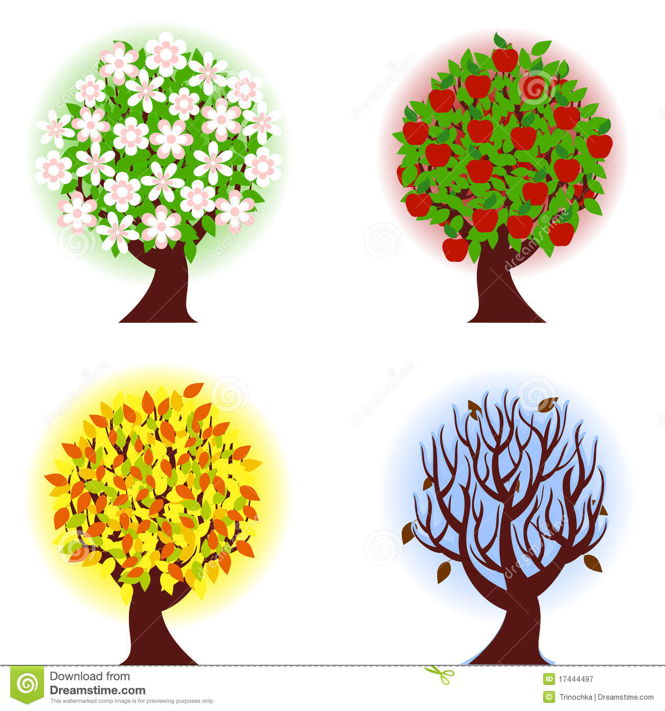 Four Seasons Of Apple Tree Stock Vector