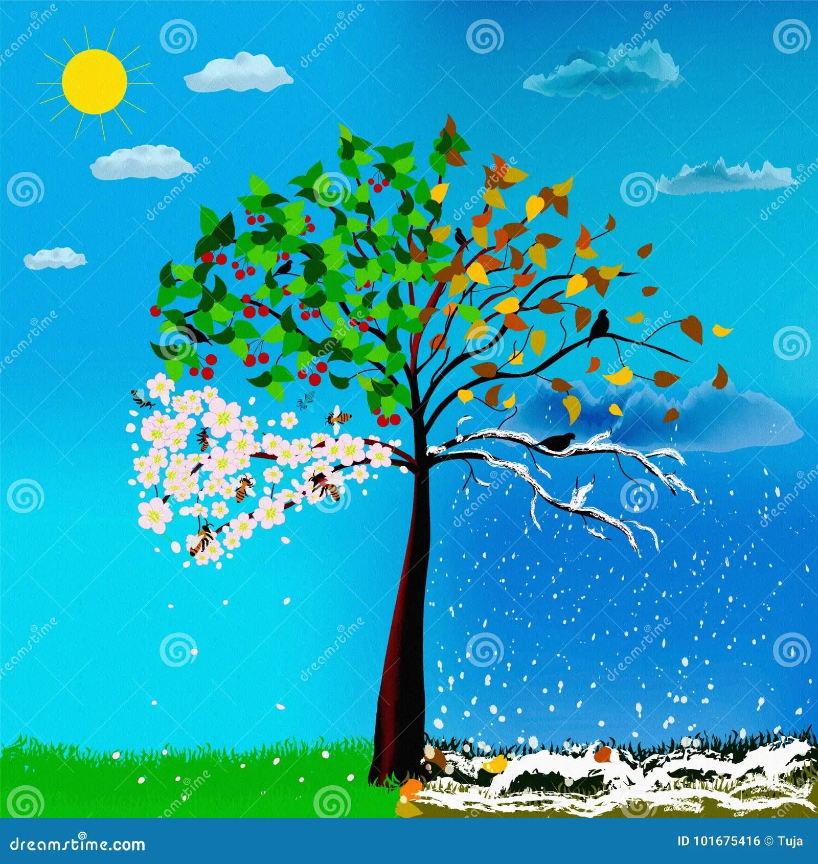 Four Seasons Of Cherry Tree Stock Illustration