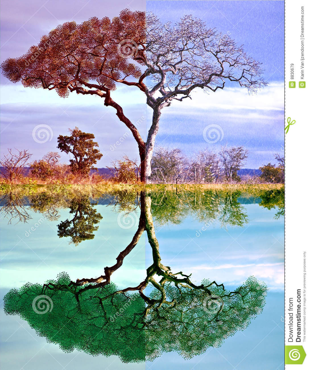 Four Seasons Tree Royalty Free Stock Images
