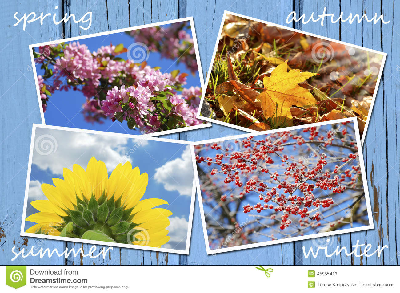 Four Seasons Of The Year Collection Stock Image