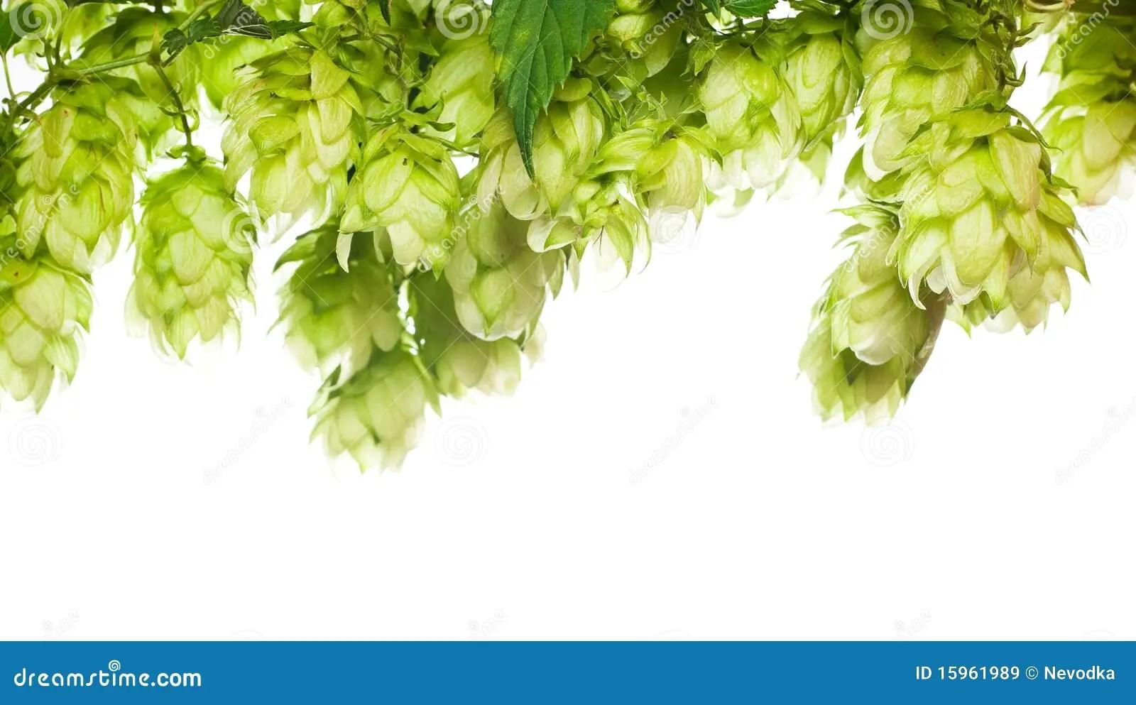 Fresh What Hop Beer