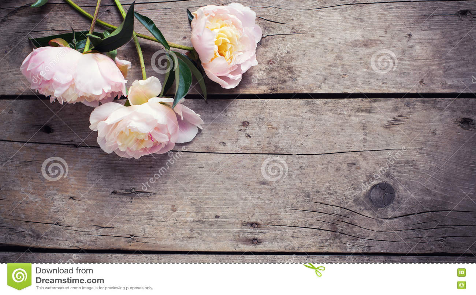 Fresh Pink Peonies Flowers On Vintage Wooden Background