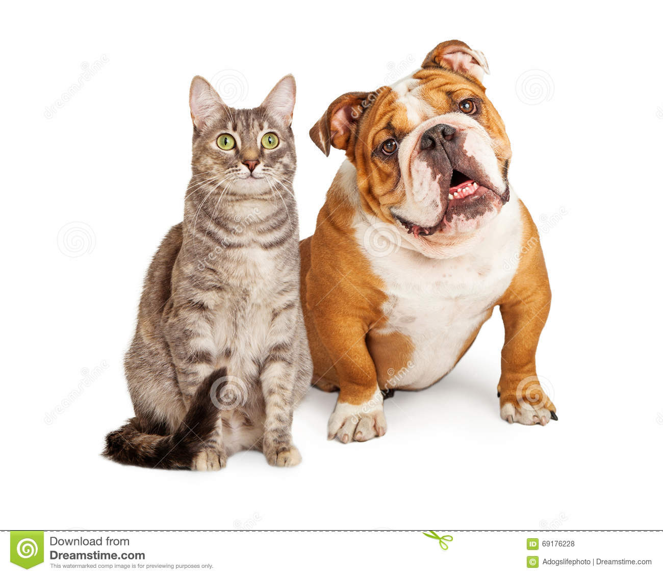 Friendly Dog And Cat Together Stock Photo