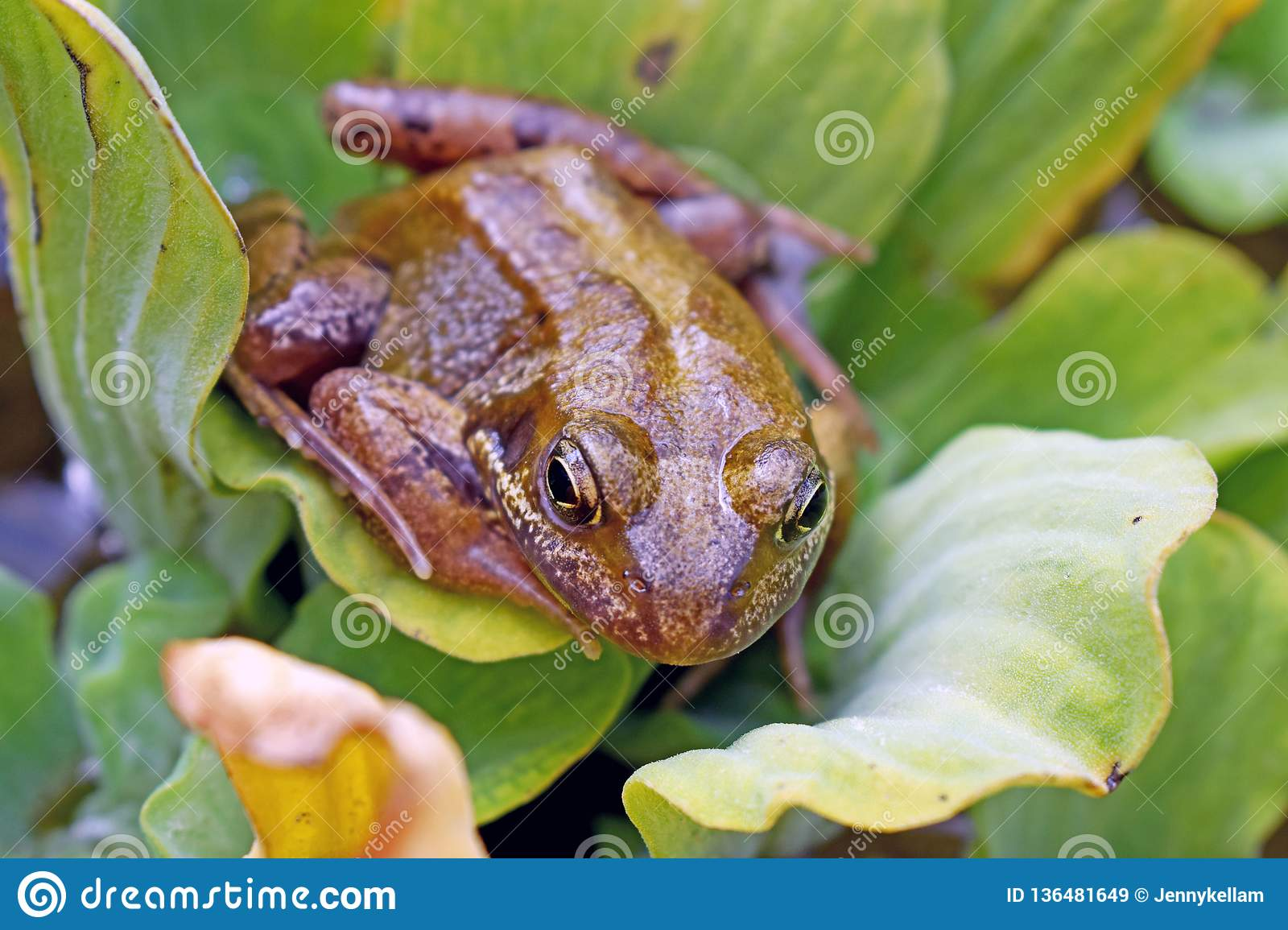 Frog Sitting On A Lily Pad Stock Image Image Of Pads