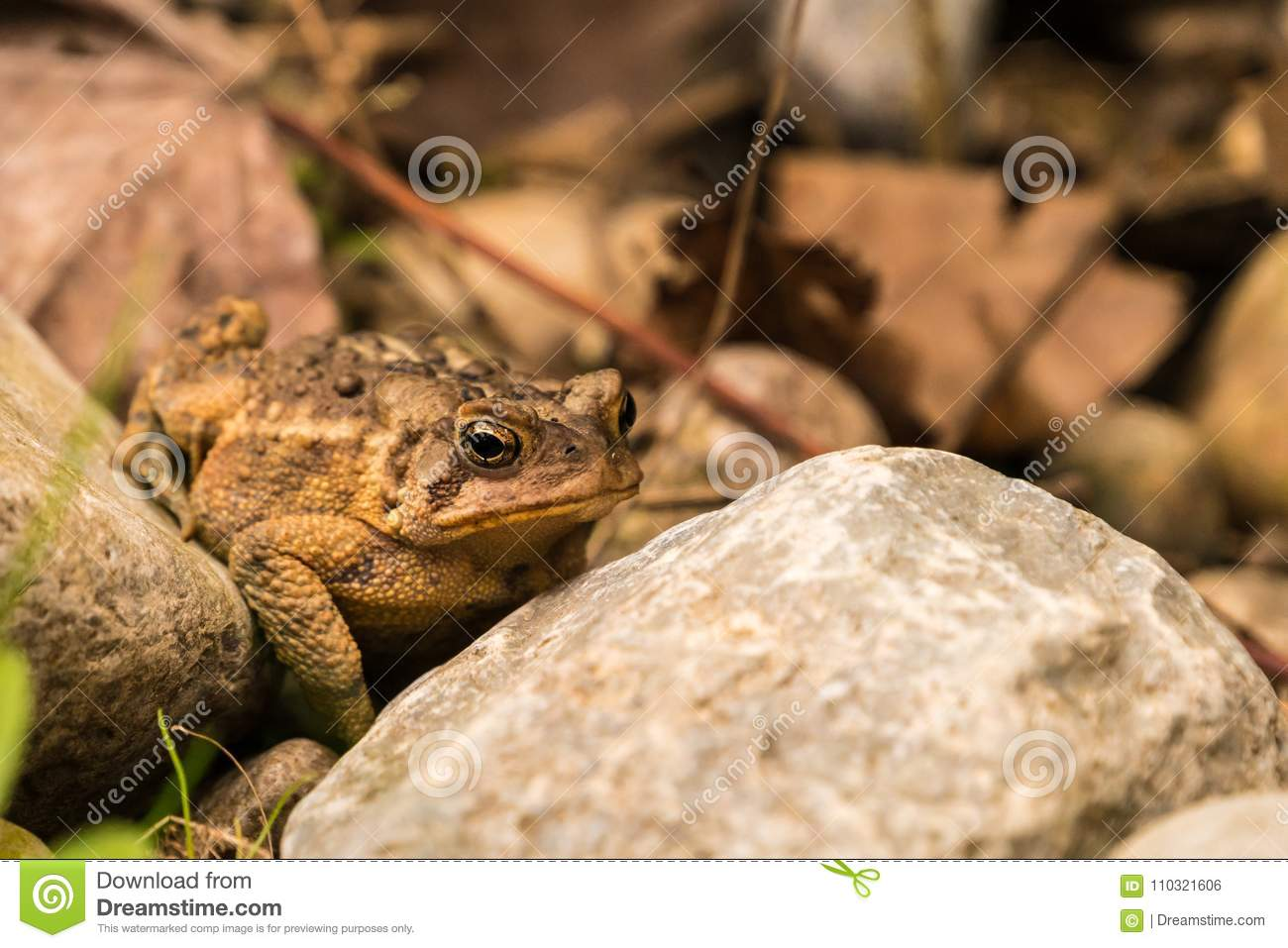 Toad In The Garden Stock Photo Image Of Waiting Image