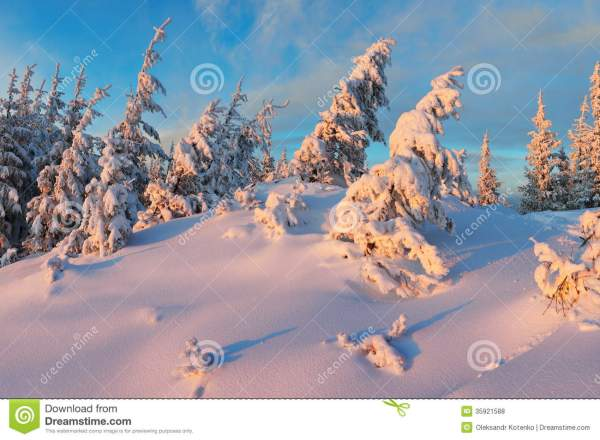 Frosty night in the woods stock photo. Image of evening ...