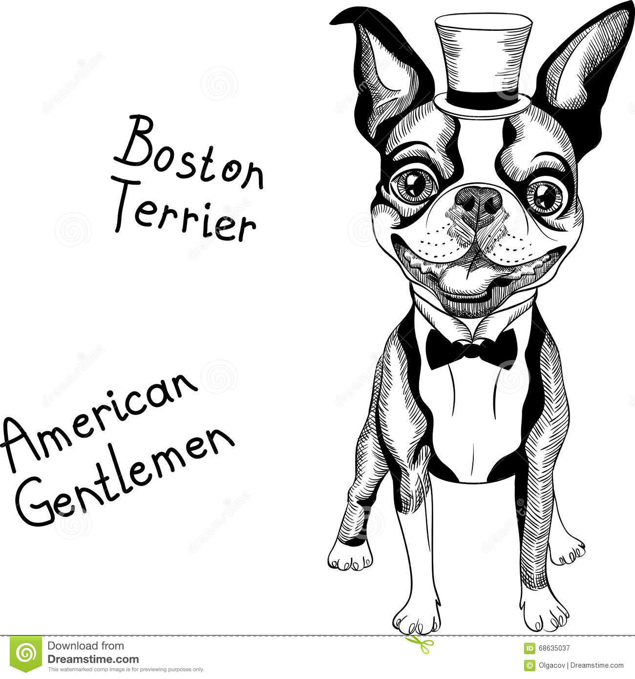 Funny Cartoon Hipster Boston Terrier Breed Smiling Stock