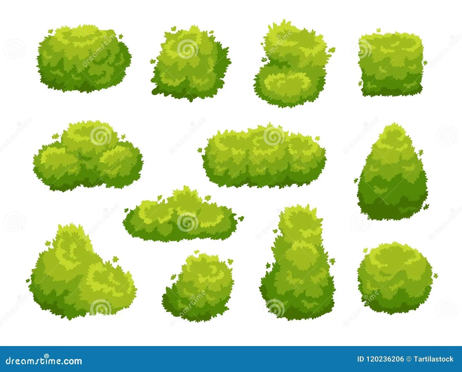 Garden Bush. Green Garden Vegetation Bushes. Cartoon