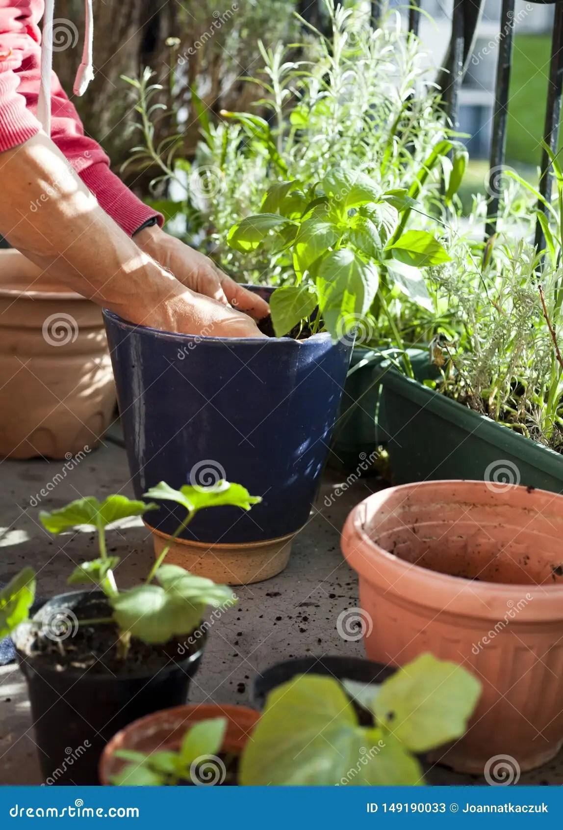 Gardener Activity On The Sunny Balcony
