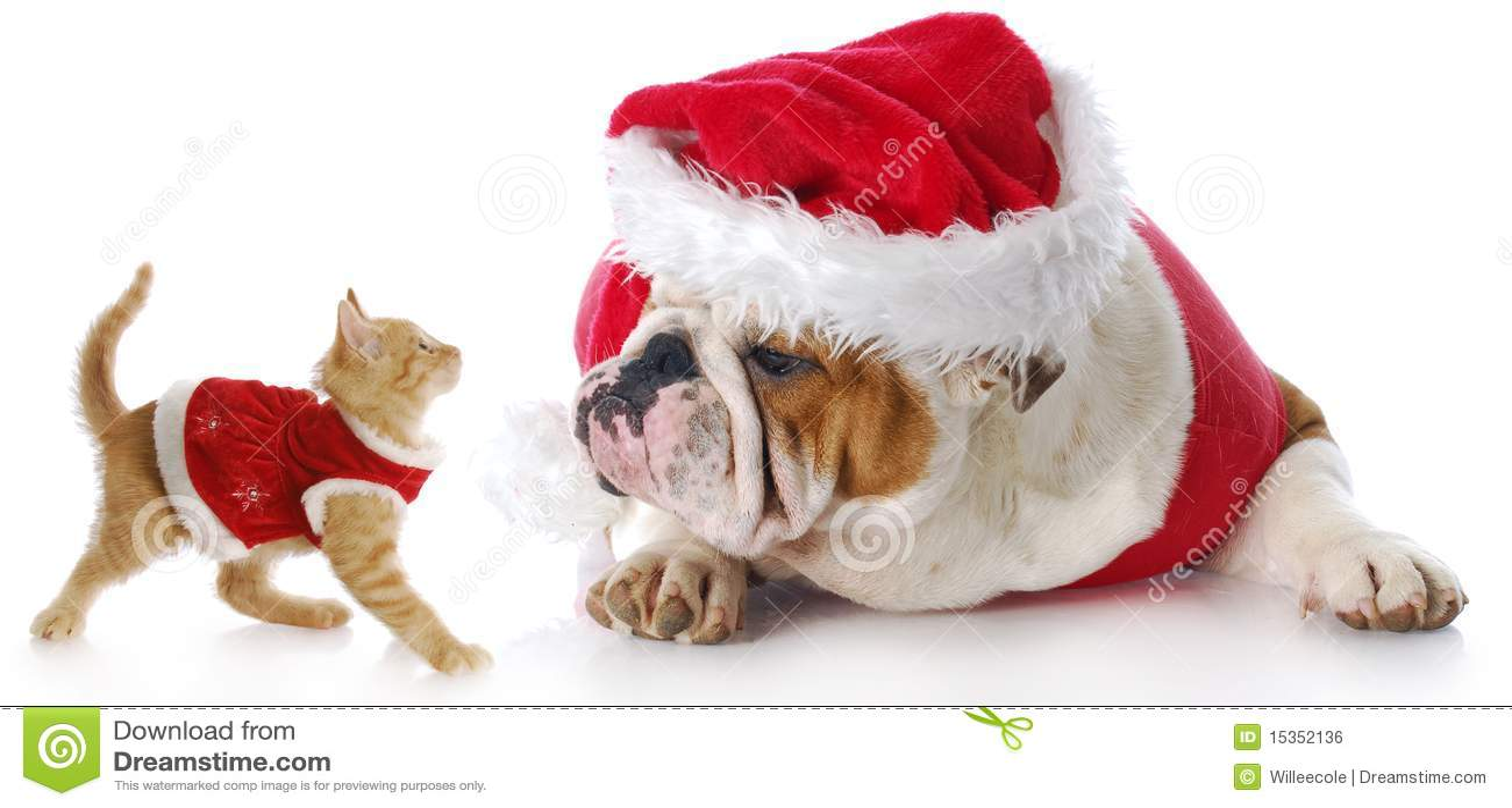 Gatto E Cane Di Natale Fotografia Stock Immagine Di