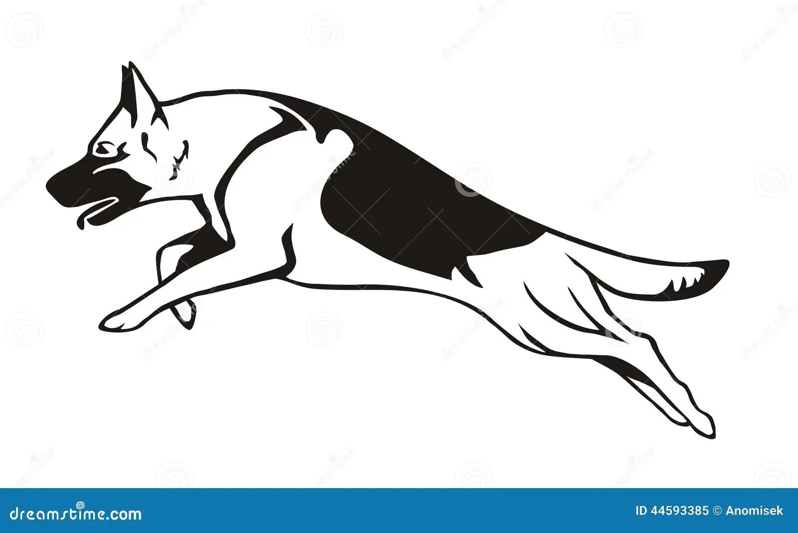 Belgian Schipperke Dog