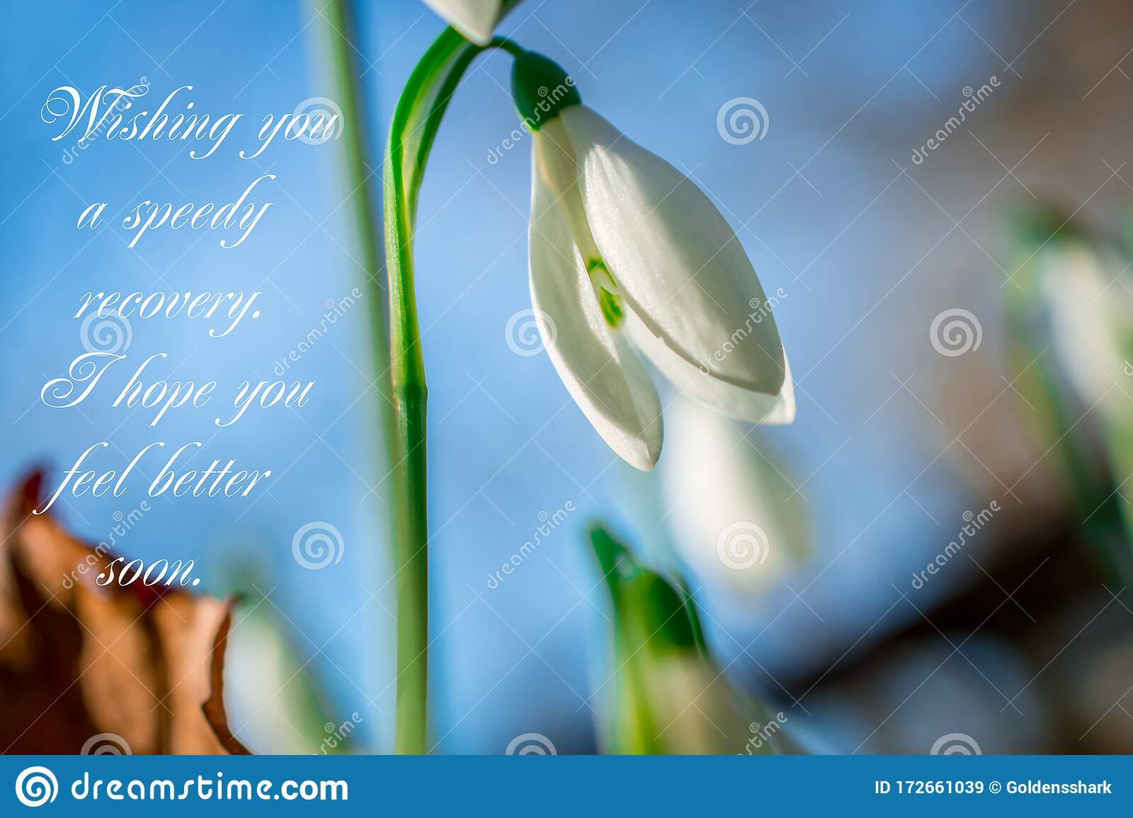 Get Well Soon White Flowers With Text Feel Better Soon