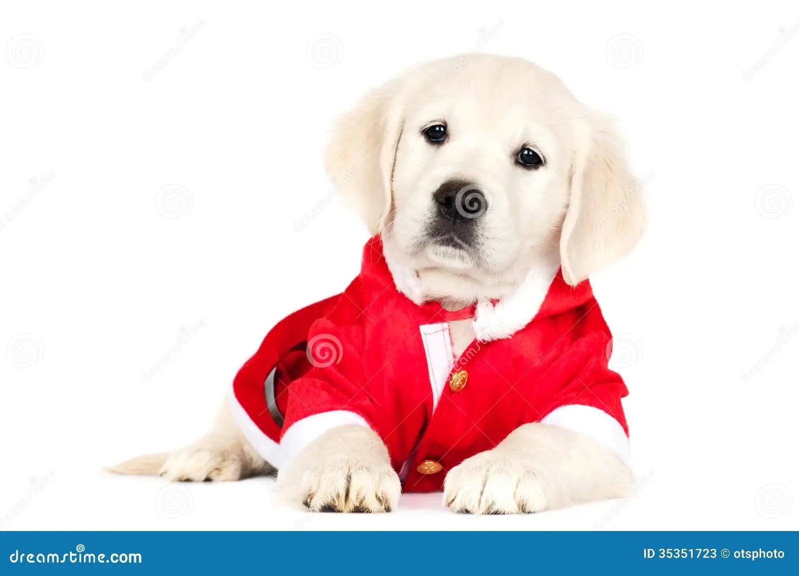 Golden Retriever Puppy In A Santa Costume Stock Photos