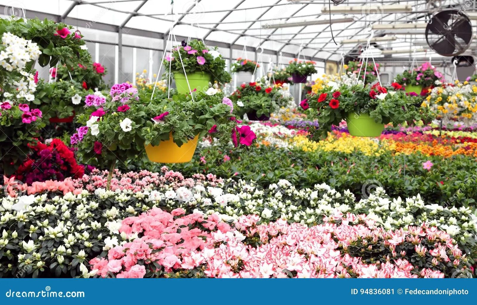 grande serre chaude avec de belles fleurs et plantes a vendre dans t image stock image du centrales commercial 94836081