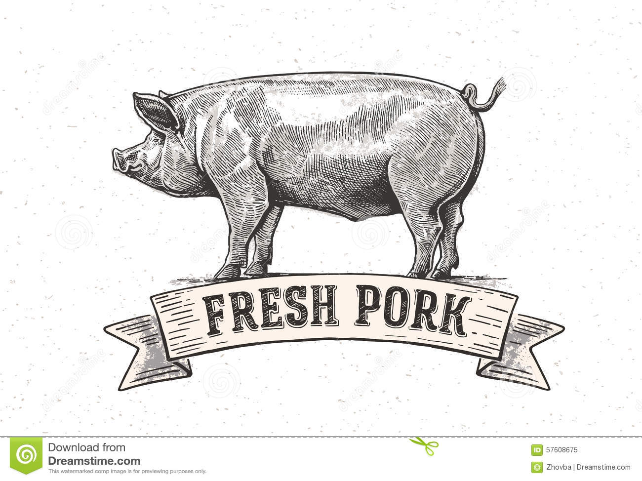 Graphic Pig Stock Vector Illustration Of Labeled