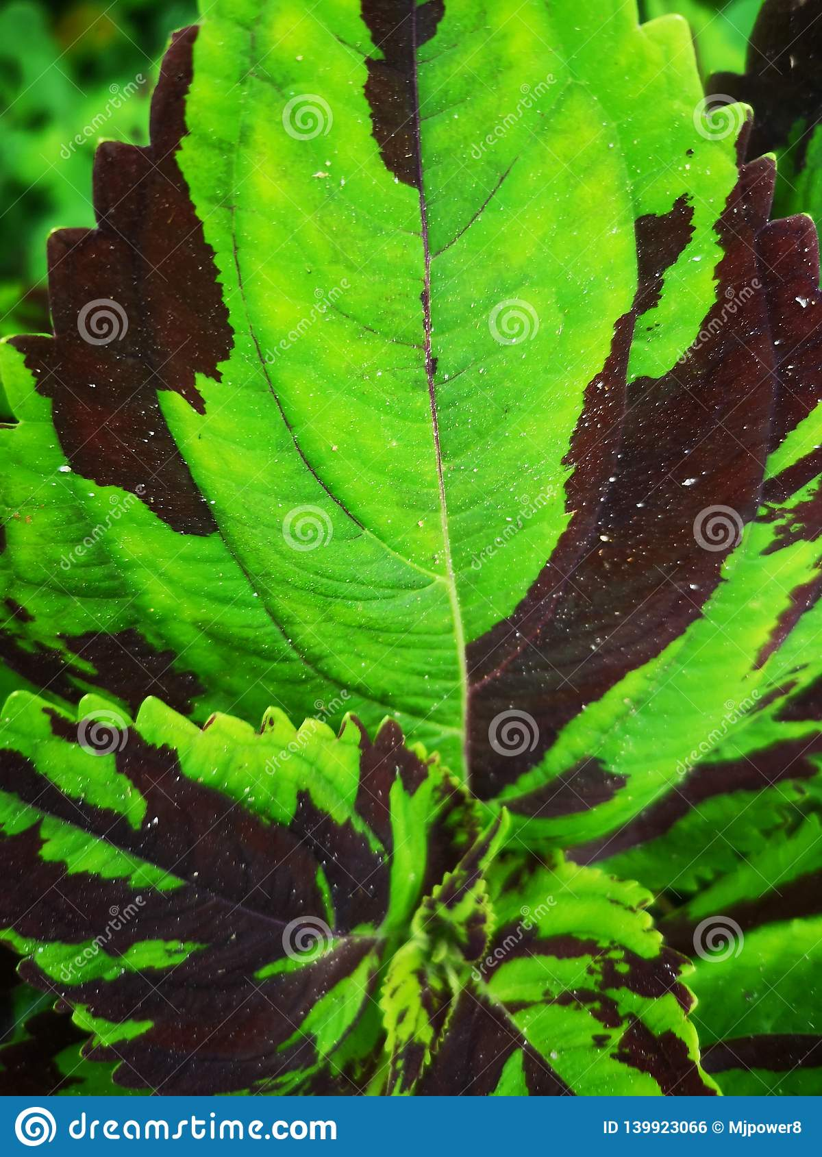 Green And Brown Tropical Leaf Background Stock Photo