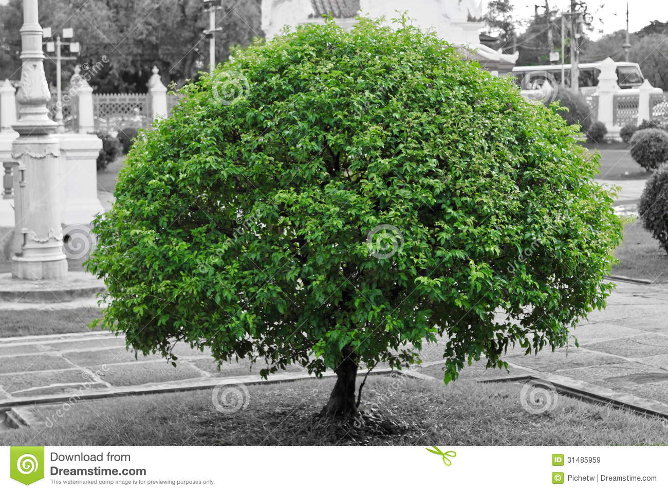 Stock Photo Green Tree With Black And White Background